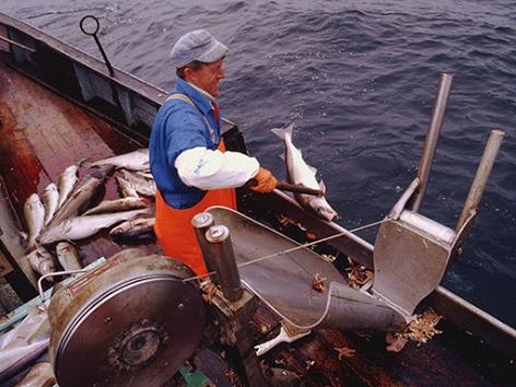 industri fiskeri